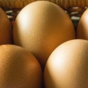 huevos seguridad alimentaria
