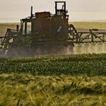 cultivo seguridad alimentaria