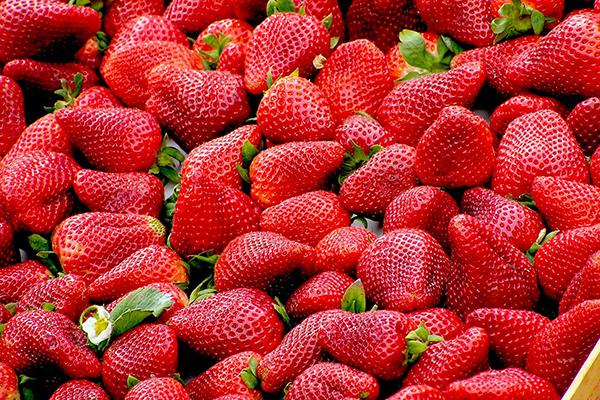 fresas seguridad alimentaria